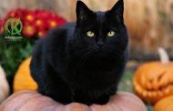 Кошка — магическое животное!