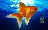 Очень классное упражнение «Золотая рыбка»