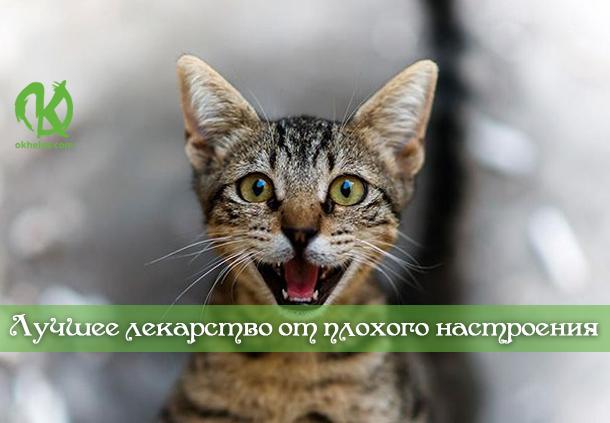 Кота заводят, чтобы кот был маяком во тьме невзгод...