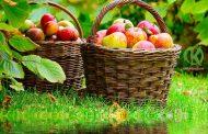 Яблочный Спас: обряды на благополучие и процветание