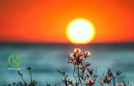 День летнего солнцестояния - день программирования будущего