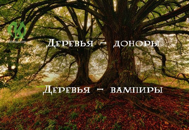 Деревья - доноры и деревья - вампиры