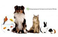 Домашние животные и энергетика квартиры