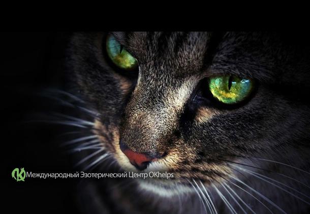 Кошка – питомец, который защищает вас и ваш дом от негативной энергии